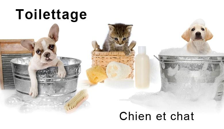 Toilettagge pour chien et chat